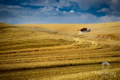 Palouse Harvest 3997