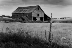 Palouse Barn 4544
