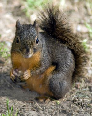 squirrel_8280.jpg